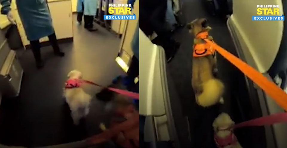 dogs on flight